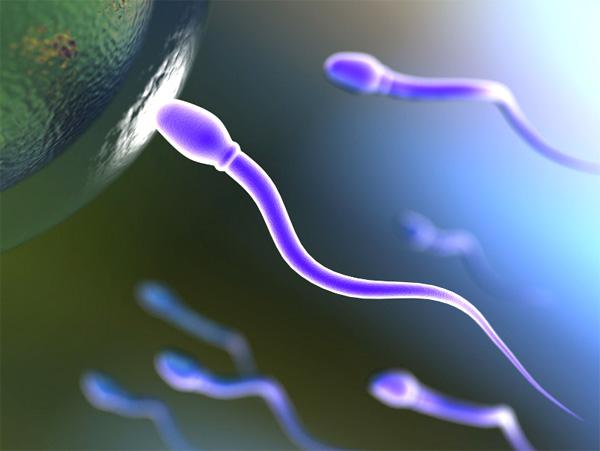 Нормативы спермаграммы возможно пересмотрят