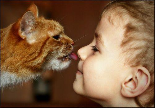 Что необходимо знать, когда в доме кошка