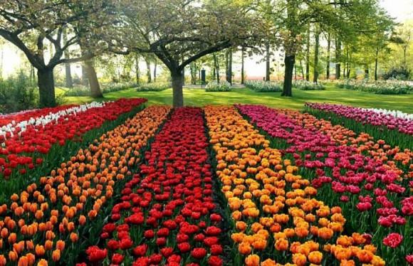 Цветы: творим чудо