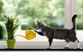 Особенности полива комнатных растений – Полезные советы для дома