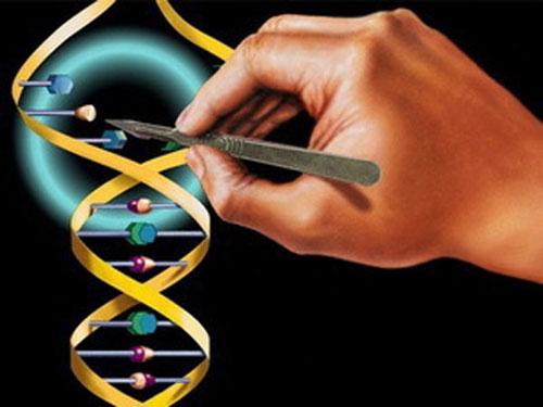 Биотехнологии используют генную терапию для усиления эрекции
