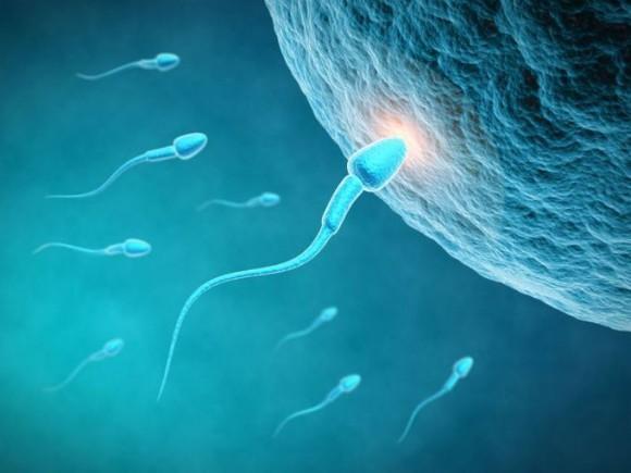 повышенная плотность сперматозоидов-нш1