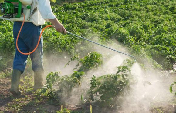 Овощи с пестицидами убивают сперму мужчин