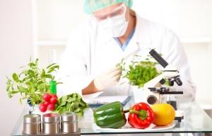 ГМО-продукты вредят мужском здоровью, считают ученые
