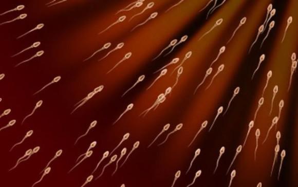 Чем отличаются друг от друга сперматозоиды