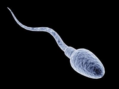 Созданы сперматозоиды из клеток кожи