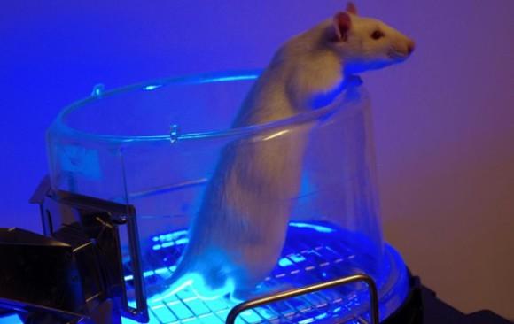 Синяя лампа поможет излечить импотенцию — ученые
