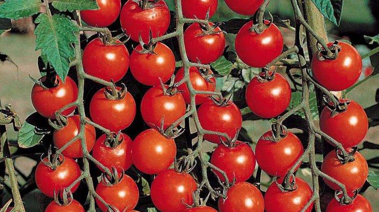 Простатит можно вылечить помидорами — ученые