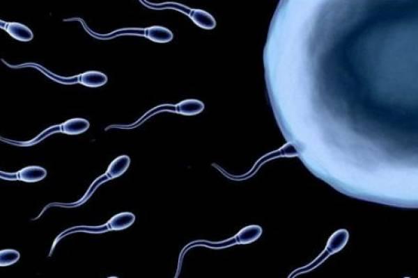 Генетики раскрывают тайны мужского бесплодия