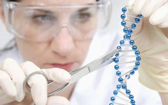 Импотенцию будут изводить на генном уровне