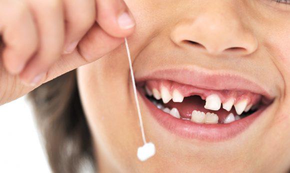 Зубы. Какими бывают зубы?