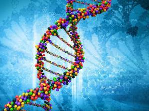 Химические вещества в продуктах питания и гигиены разрушают мужские половые гормоны
