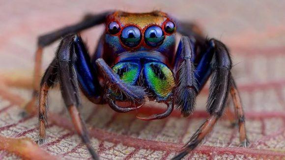 Укус ядовитого паука может вылечить от импотенции