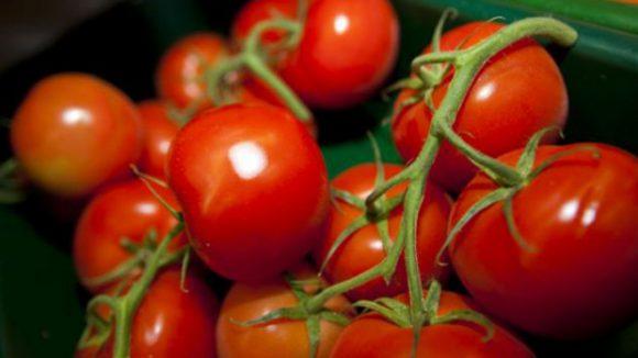 Употребление помидоров улучшает мужскую фертильность