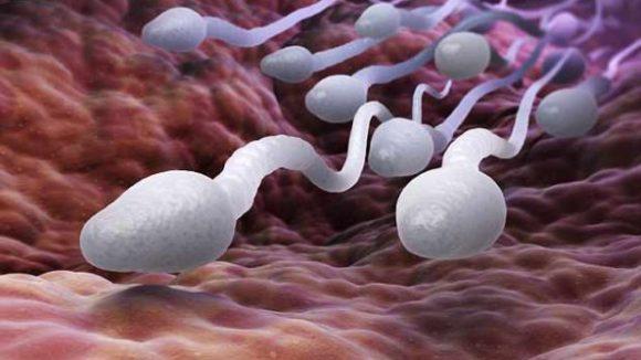 Космическое агентство NASA отправило мужскую сперму в космос