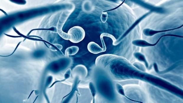 Ученые обнаружили в мужских яичках бактерии, связанные с фертильностью
