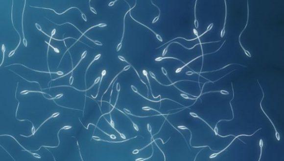 Альтернатива вазектомии: создан новый мужской контрацептив в виде геля