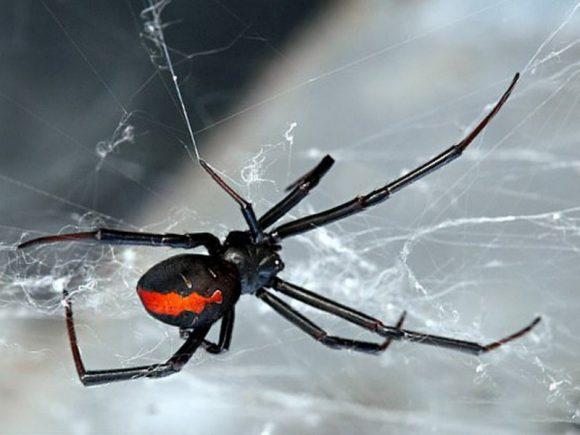 После укуса паука мужчина не смог посещать туалет
