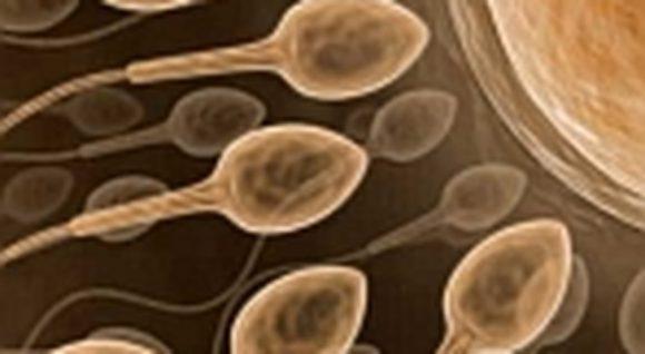 Качество спермы — показатель здоровья
