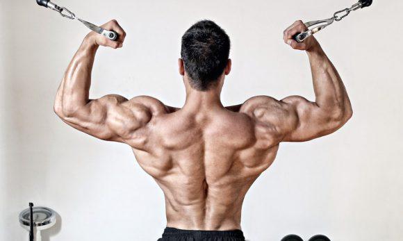 «Дизайн тела говорит о жизненной стратегии»: зачем нужна широкая спина