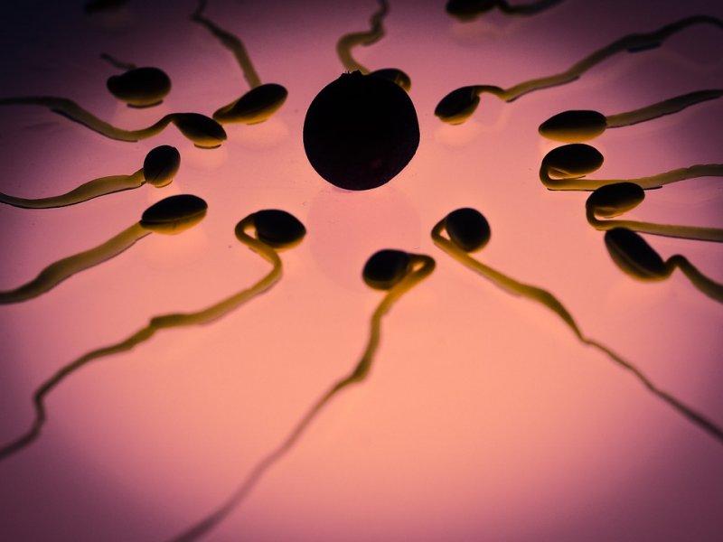 Конкурентоспособная сперма: она становится активнее в присутствии сексуальных конкурентов