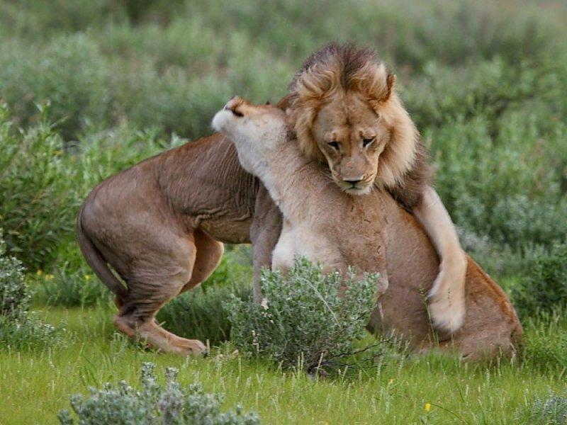 Ученые выяснили, что окситоцин толкает мужчин на случайные интрижки
