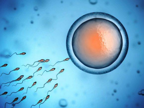 Плохое питание изменяет сперматозоиды за неделю
