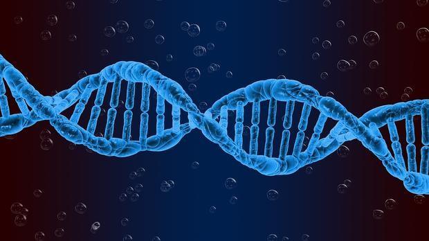 Стволовые клетки могут лечить мужское бесплодие