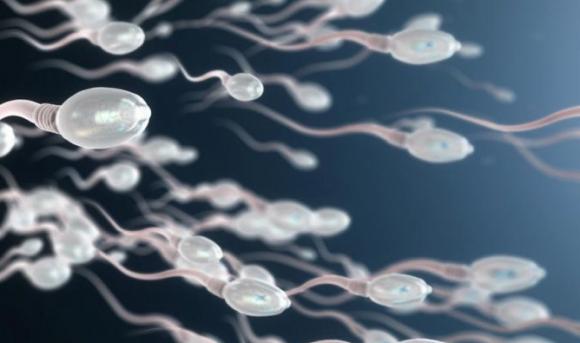 Мифы о сперме: как долго сперматозойды выживают в воздухе и воде?