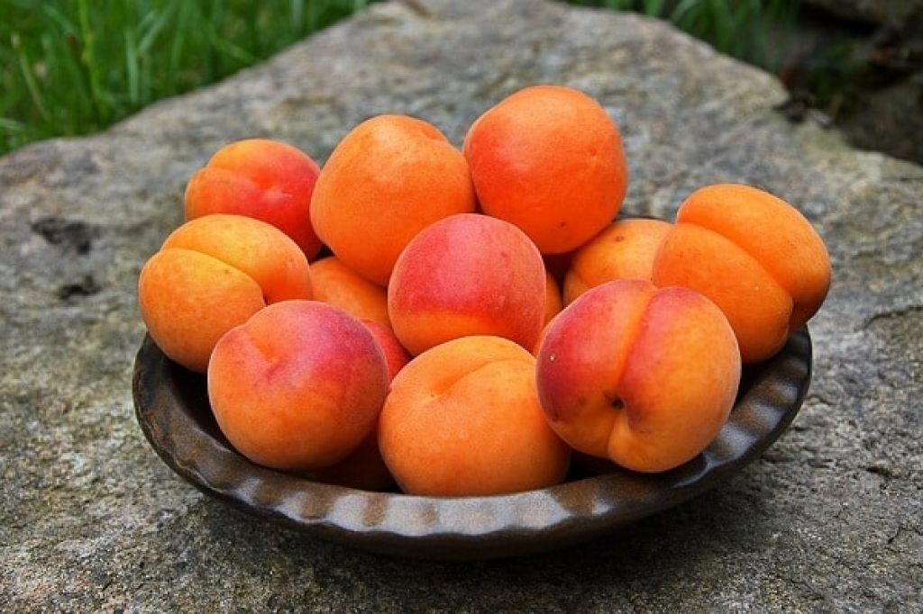 Сладкие абрикосы в Санкт-Петербурге